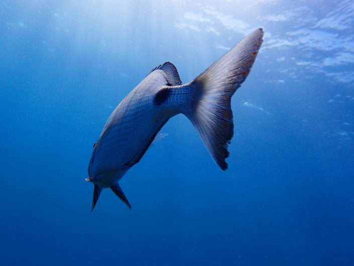 Species – Mediterranean