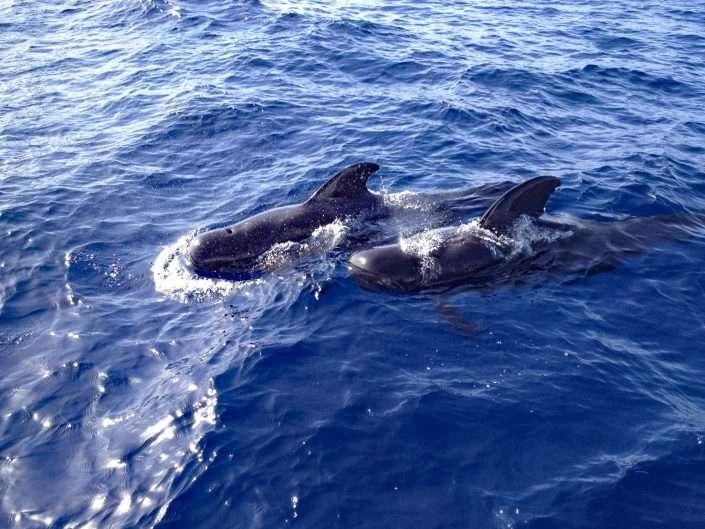 Species – Whales