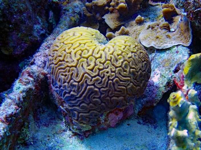 Species – Corals & Sea Fans