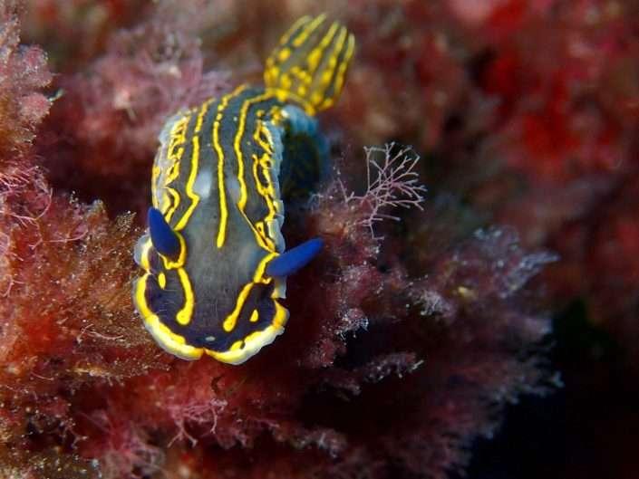 Species – Nudis, Seahares & Snails